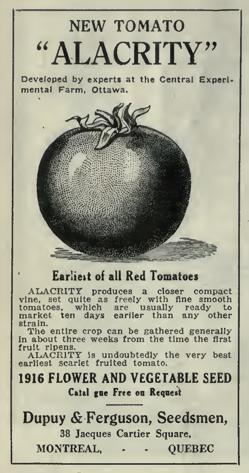 The 100-Year-Old Tomato - Alacrity