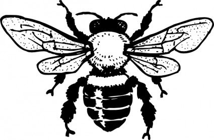 Bee graphic