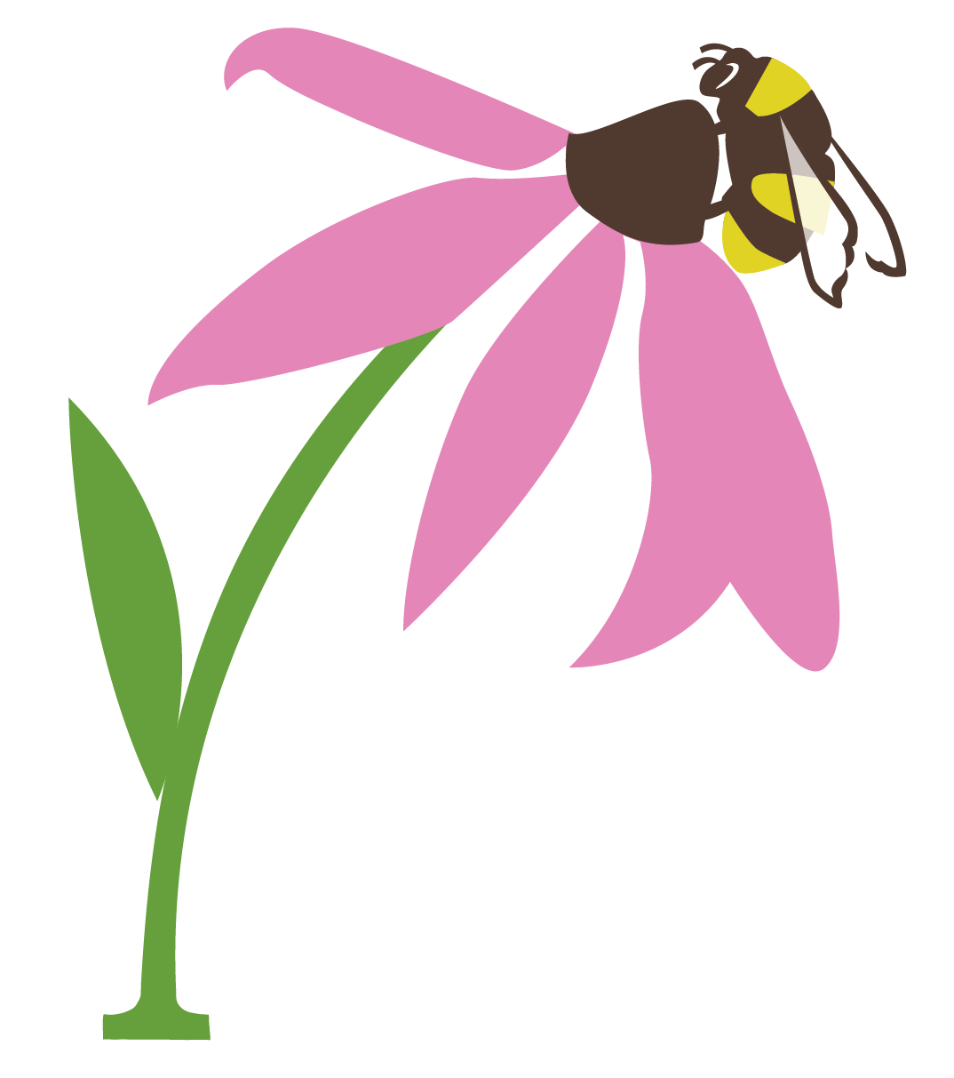 Pollination canada seeds pollination canada is a project under the umbrella of seeds of diversity canada biocorpaavc Choice Image