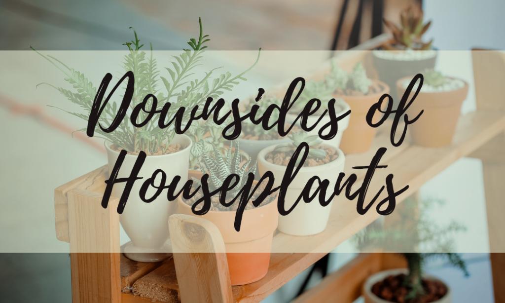 Downsides of Houseplants