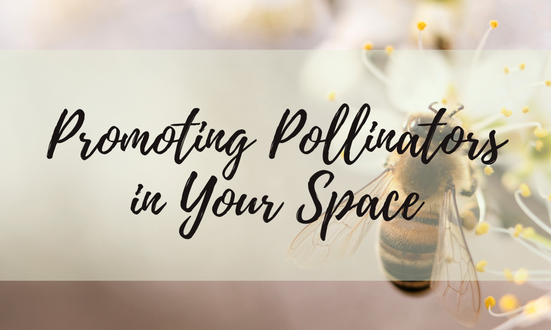 Promoting Pollinators In Your Space