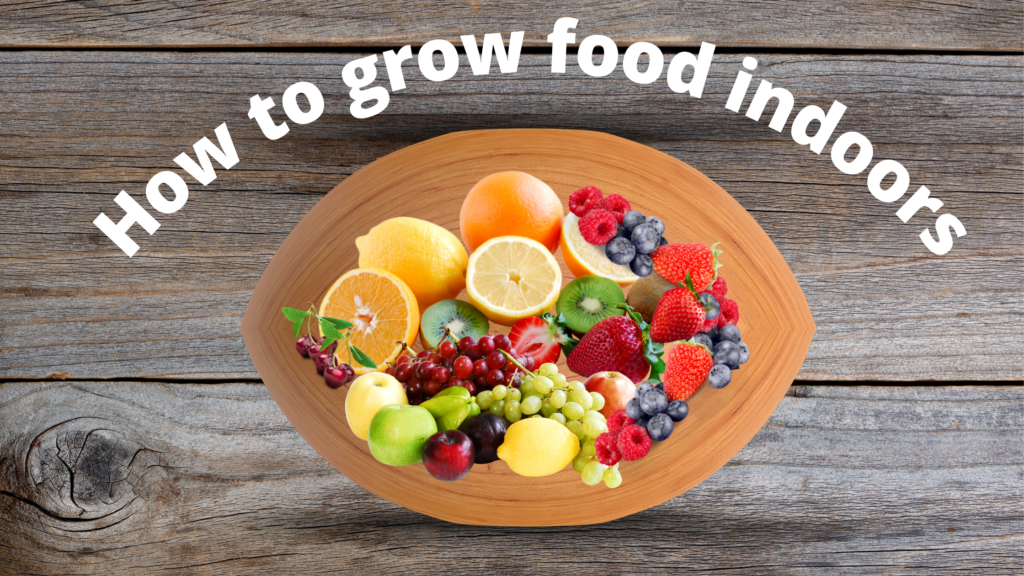 How to Grow Food Indoors