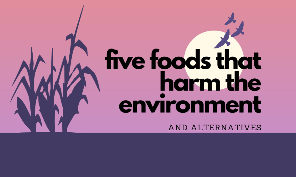 5 Foods that Harm the Environment and Their Alternatives