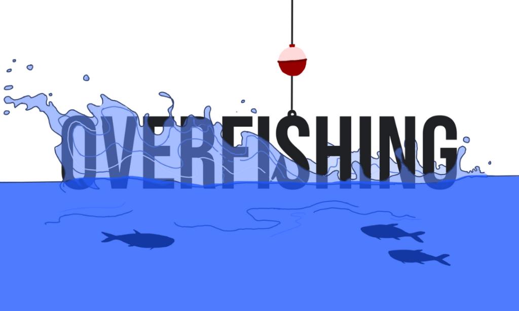 Overfishing – A Reality Check